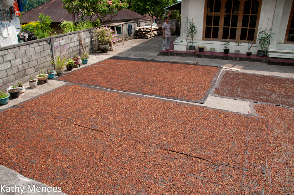 Rice drying in someone's front yard.