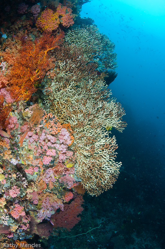 Coral Reef at Bangka Island