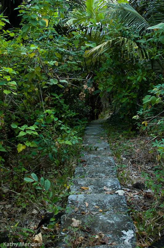 Steps head into the jungle and go to the village.
