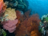 Colorful Reef at Bangka Island