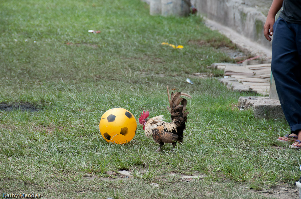 Children played soccer with a rooster.
