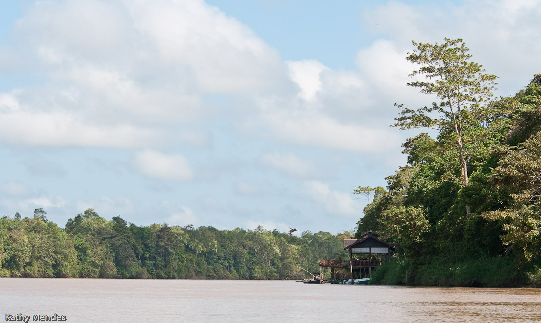 The Kinabatangan river is wide and muddy!