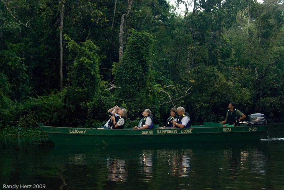 Small boats are used to cruise the river looking for wildlife and birds.
