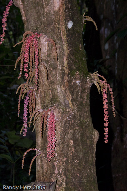 Strange flowers growing on a tree in the jungle.