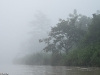 Morning mist on the Kinabatangan River.