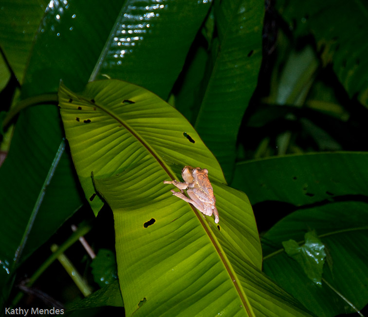 Frog on a Frond at the Pond.