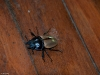 Big beetle of some sort on the floor!