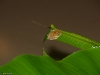 Tiny frog on a leaf at the pond.