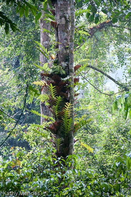 Tree with ferns growing out of it.