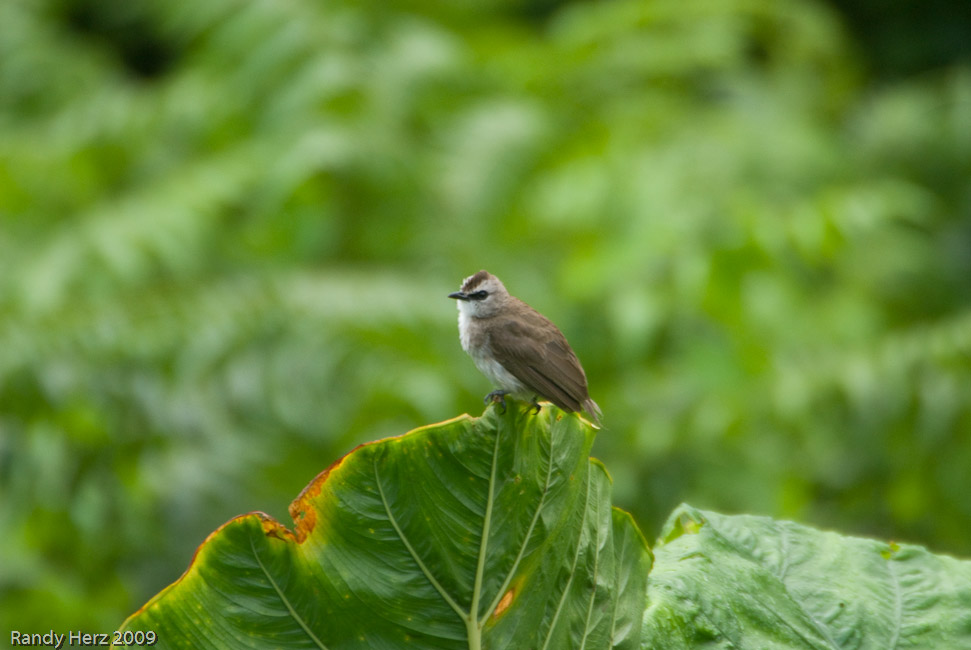 Lots of small birds are seen next to the lodge.