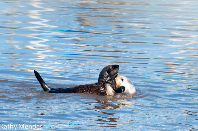 Mother Otter and Big Pup
