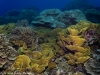 Another view of the healthy coral reef.