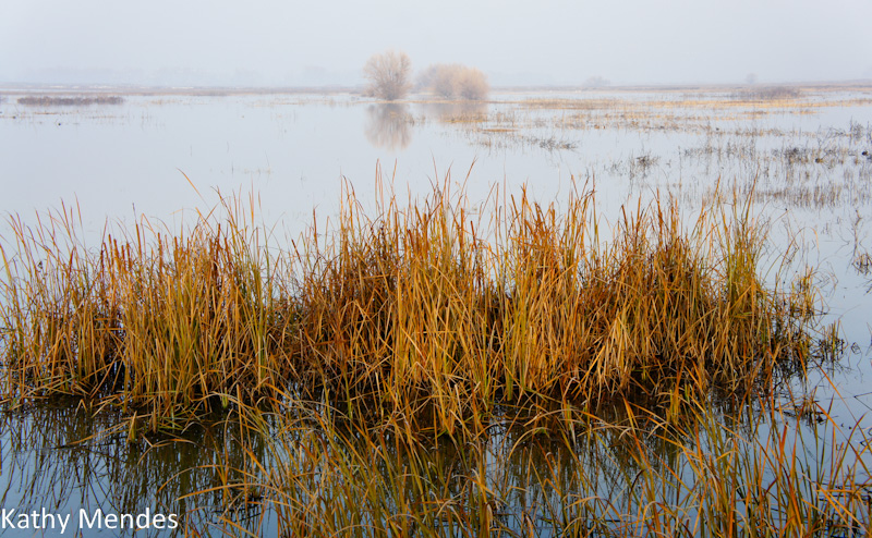 Reeds, trees and water in the fog.