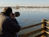 Randy Shoots Snow Geese From Viewing Platform