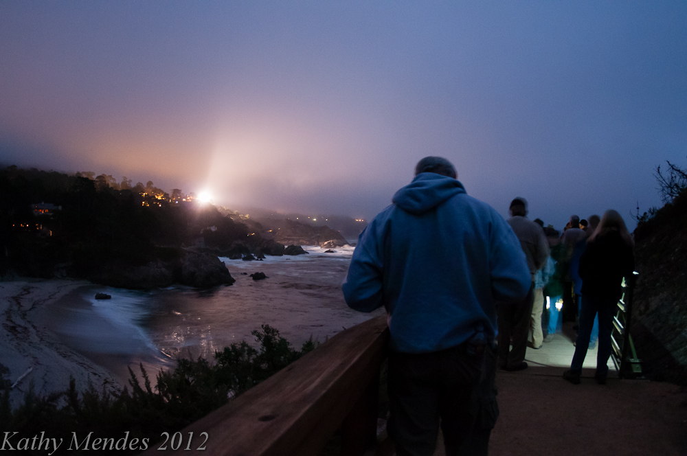 Guided Moonlight (and spotlight) Walk at Point Lobos