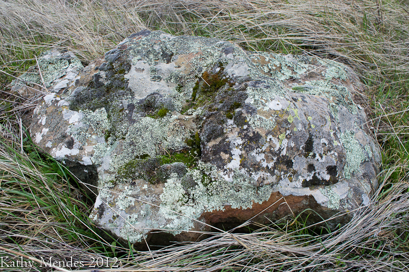 The lichen covered rocks are beautiful!