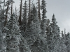 Snow Covered Trees at Cedar Breaks National Monument