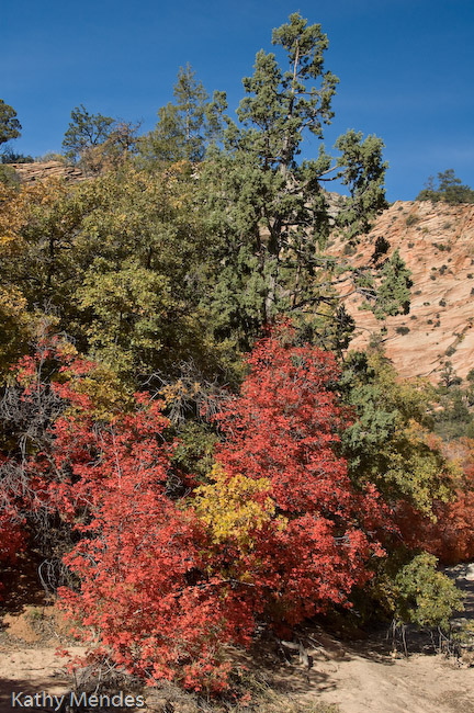 Fall Colors near Zion National Park