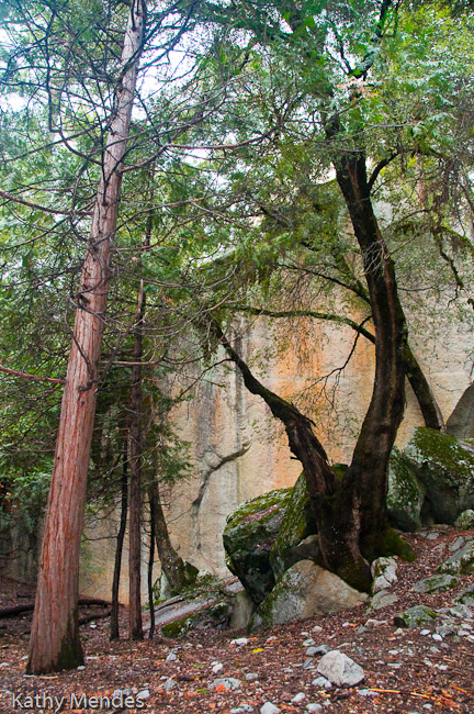 Trees and Rock