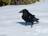 I know it\'s not people, but the raven had lots of character.