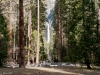 Trail through the tall trees to Lower Yosemite Falls lookout.