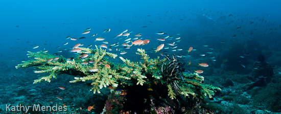 Reef Fish and Hard Coral