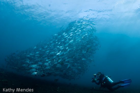 Schooling Fish Swirl in the Blue Water at the Liberty Wreck, Tulamben, Bali