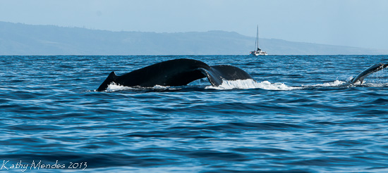 Whale Mom and Calf Tails
